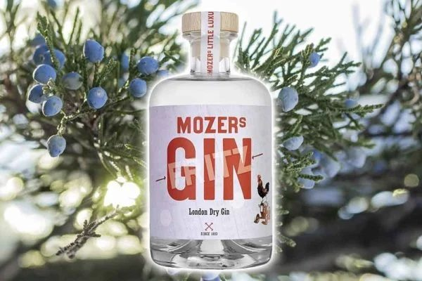 A Bottle of Gin from Mozers Spirits with a Juniper Tree in the Background